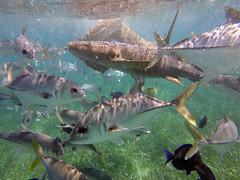 Land of Belize 2017 (James Patterson) Tags: belize thisislife cayecaulker island islandlife goslow snorkel snorkelling aquatic caribbean gopro goprohero5black adventure travel