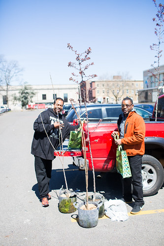 South Philly Yard Tree Giveaway, April 2, 2017