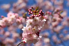 springtime colors (dr.larsbergmann) Tags: spring warmcolors beautiful bokeh canon photography photo flickr nature tree ef100mmf28lmacroisusm