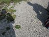 2008-09-13-0016.jpg (Fotorob) Tags: lichtschaduw engeland cornwall england margit rob perranuthnoe