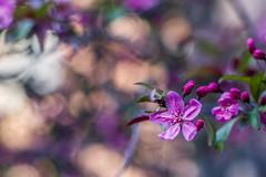 Baseball Nut (Ayas A.) Tags: smcpda55mmf14sdm pentax k3 55mm f14 bokeh colors outdoors spring purple da pentaxart