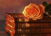 Read a book SS (BirgittaSjostedt) Tags: sliderssunday book still filter ss process paint rose birgittasjostedt magicunicornverybest ie