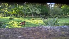 Éh!!! Tu veux notre photo??!!! ;-)  Éh!!! You want shot us???!!! ;-) (Isa****) Tags: chèvres goats parc park nature céret mur wall marrant funny 7dwf