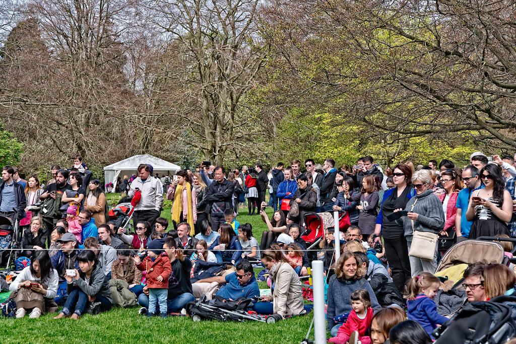 EXPERIENCE JAPAN FESTIVAL DAY 2017 [AT FARMLEIGH IN PHOENIX PARK]-127107