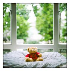 Bear (Noah.Fang) Tags: hasselblad 500cm 80mm f28 bear indoor bokeh