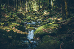 Magical Black Forest (freyavev) Tags: 35mm canon canon700d vsco stream water monbachtal badliebenzell badenwürttemberg schwarzwald blackforest forest greenery nature germany deutschland magicalforest moss stones