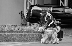Dogipede (burnt dirt) Tags: houston texas downtown city town mainstreet street sidewalk corner crosswalk streetphotography fujifilm xt1 bw blackandwhite girl woman people person phone cellphone purse bag standing walking dog dogs two leash travel travelling