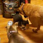 Hiroki and the dogs thumbnail