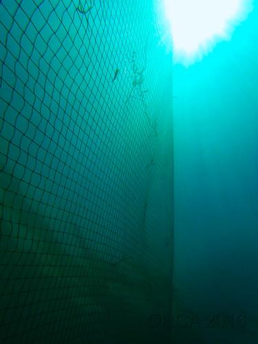 trap nets(1)