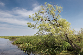 Point Pelee National Park (Ontario, Canada)