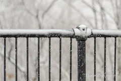 HFF (KAM918) Tags: happy fence friday fenced hff lowell massachusetts ma nikon d610 snowy spring snowstorm weather fencefriday