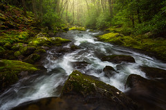 Rainy & Misty Spring - 1212 (J & W Photography) Tags: 2017 april gsmnp greatsmokymountainsnational jwphotography lynncampprong smokies spring blossom cascades creek dogwoodflower dogwoodtrees landscape moss mossyrocks nationalpark nature rain rainy trees waterfalls greatsmokymountainsnationalpark