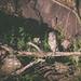 Owl on the Serengeti