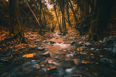 Fairy Land (Alex Apostolopoulos) Tags: spring trees vegetation water flow forest stream landscape longexposure fairy landscapephotography rocks cyprus sony sonya6000 ilce6000 samyang samyang12mmf20ncscs manfrottobefree