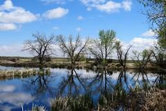 Rose Pond (Patricia Henschen) Tags: colorado coloradosprings chicobasinranch ranch rosepond pond rose