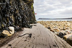 Groynes (phillconnellphotos) Tags: ifttt 500px sky landscape sea water beach travel ocean rock wood sand shore seashore outdoors pebbles seaweed groynes no person