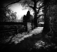 Highlighted footpath. (I line photography) Tags: cawthorn blackandwhite tree footpath sunshine reflection shadows woodenfence
