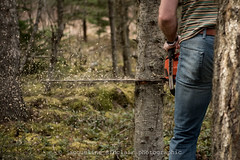 Lumberjack (Jacqueline Sinclair) Tags: chainsaw trees chain saw cut jeans tree down chips tool tools man back