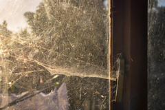 Website (NVOXVII) Tags: window cobweb web garage backlit dusty unkempt arty dusk lighting canon m10 mirrorless indoor observation spiderweb nature household detail neglect