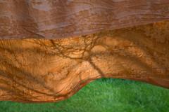 (Kirill Dorokhov) Tags: tree silhouette shadows laundry day spring wind gold texture curve curves outdoor nature quiet wave almaty kazakhstan кирилл дорохов дерево тень белье силуэт branch