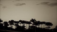 Brasília 57 anos ! (Francisco Aragão) Tags: brasíliaaopordatarde brasilia distritofederal brasil sunset sky clouds df franciscoaragão fotografo picture fotografia sepiatone brazil centrooetse capitaldobrasilia aniversariodebrasilia brasilia57anos palmeirasimperial contraluz monocromatico canon5dmkii canonlens24105mm nuvens ceu silhouettes backlight siluetas silhuetas landscape paisagemurbana urbanscene