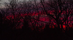 Red Through the Trees (brucetopher) Tags: fire passion sunset red ruby purple sky skies stunning beauty beautiful colorful rich saturated sunrise light glow glowing fiery burning burn silhouette forest tree trees black shadow sunlight clouds