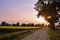 2017-04-29_07-18-32 (.Mirko.) Tags: sunset tramonto goldenhour campagna landscape paesaggio