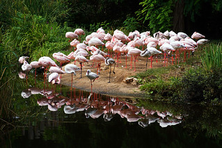 Flamingo / Explore 22.04.2017