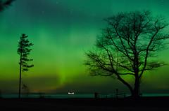 Northern_lights_1 (divyatinnanuri) Tags: northern lights aurora dark sky stars dancing tree silhoutte dawn april spring stunning amazing upper peninsula michigan 2017 calumet