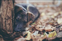 35 milmetros de l. (Antropocntrica) Tags: autumn dog love film animal 35mm nikon focus colours analogica f50 puppie