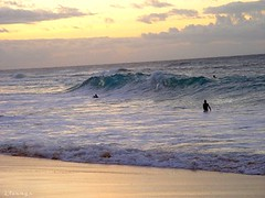DSC01944 (nalu_windward) Tags: beach hawaii sandy