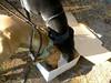GreyhoundPlanetDay2010015