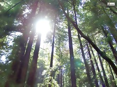 Redwood forest wallpaper (Infoway LLC - Website Development Company) Tags: wallpaper beautiful wonderful nice superb awesome images exotic hd illustrator incredible breathtaking classy bambooforest mindblowing dryforest amazonrainforest greenforest winterforest woodforest junglewallpaper sunsetwallpaper islandwallpaper summerforest responsivewebsitedesign subtropicalforestwallpaper waterfallintropicalforest redwoodforestwallpaper responsivewebdesigncompany mountainsnowforest yellowredautumnforest tropicaldesertisland tropicalforestwithriver