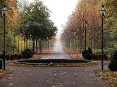 Herbst (<Leonie di Vienna>) Tags: autumn fall fog nebel laub herbst foggy olympus bltter coloured e30 wege oly herbstlaub nebelig fluchtpunkt olympuse30 buntefarben lightpaintersociety