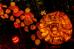 Dragon's Head (Frank C. Grace (Trig Photography)) Tags: show park november autumn holiday art fall halloween spectacular pumpkin scary october artist unitedstates display jackolantern path kentucky ky awesome pumpkins seasonal illuminated spooky trail event louisville glowing artshow aroundtheworld pumpkinart iroquoispark laughingtree multimediaproduction reckner kosair trigphotography frankcgrace passionforpumpkins holidayartistry louisvillemetroparksfoundation organicgallery