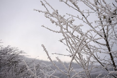 frozen (Steph Blin) Tags: trees winter snow ice hiver arbres neige campagne froid auvergne