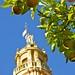 Cordoba, city of orange trees