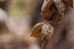 IMG_2488 (Photo.Enthusiast_1968) Tags: life road new bells bush australian line seeds bushfire seeding of