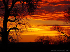 Sunset Contrasts 1 (Oliver Deisenroth) Tags: sunset tree dusk olympusstylus1