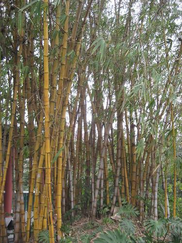 guangzhou 040