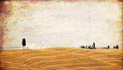 Ricordi di un sereno pomeriggio senese d'estate #1 (Celeste Messina) Tags: texture field nikon country campagna tuscany cypress siena hay toscana fieno senese cipresso collinesenesi d5000 giallooro