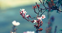 Flowers Under a Gloomy Sky (Spammie33) Tags: flowers stilllife art leave nature colors beauty outside see dof outdoor pov twig leafs