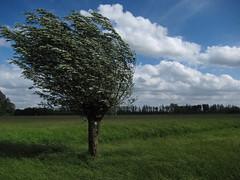 Dordrecht-36