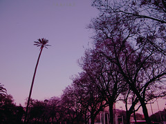 Diario de primavera: recuerdos (Ikaria2) Tags: trees light sky primavera luz atardecer spring sevilla rboles colours exterior dusk colores cielo ocaso vision:sky=0776 vision:outdoor=0918