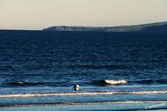 The hardy Surfer (Steve Taylor (Photography