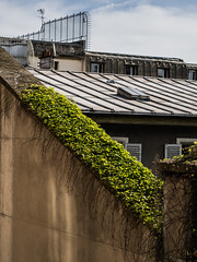 Creepers (gadsbar) Tags: roof plant paris france rooftop wall garden olympus roofs growing creeper 45mm omd