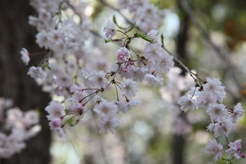 ひだまりの春