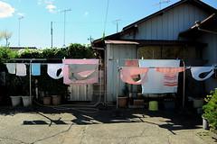 Portrait of family (Yuta Ohashi LTX) Tags: washing laundry street japan snap 日本 路地裏 路上 スナップ 洗濯 sunnyday