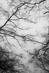 Branches, 01 (jayvalentinephotography) Tags: blackandwhite branch branches fog forest mist nature tree trees winter wood woods