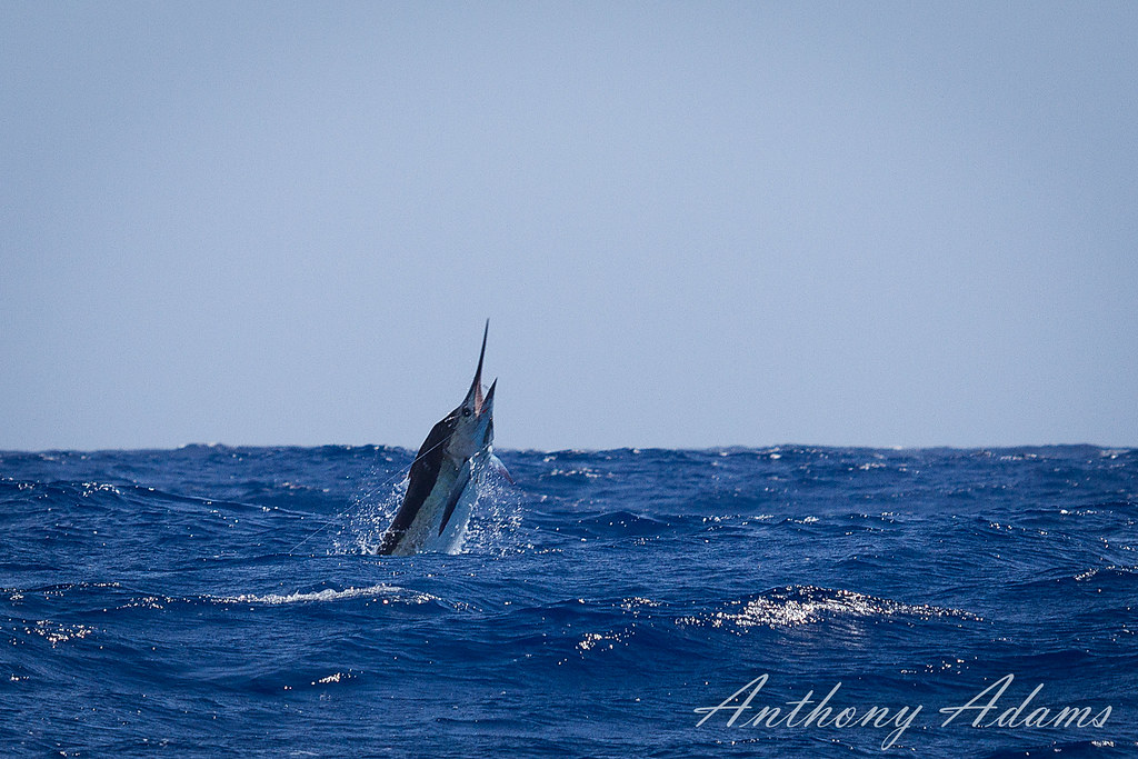 Marlin Genetics Network
